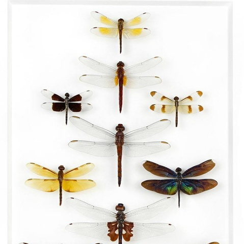 Dragonfly Formation