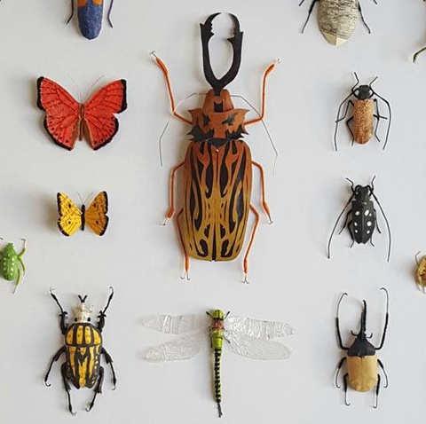 Insect Assemblage