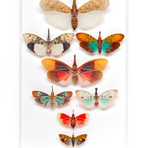 Lanternfly Formation